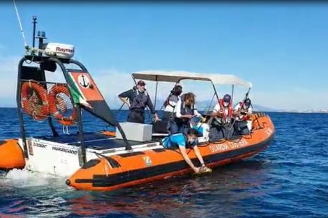 Livorno liberazione tartaruga