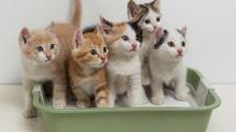 gatti-lettiere-compostabili