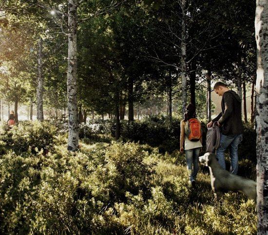 Bosco biosostenibile_Toscana Ambiente
