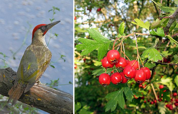 Birdgarden, a Empoli un'occasione per imparare a ospitare fiori e animali