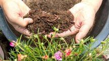 Lombrichi humus-Toscana-ambiente