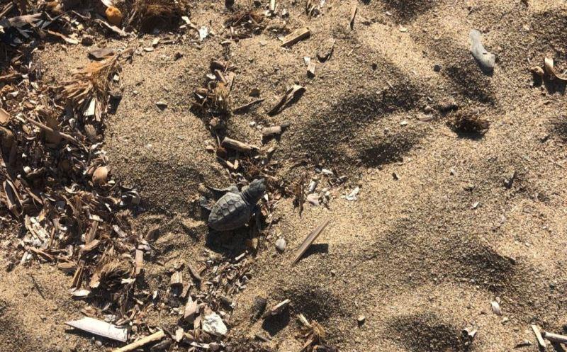 tartarughe nascita Elba_Toscana ambiente